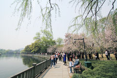West lake in hangzhou, china Royalty Free Stock Photo