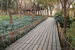 West Lake park in Hangzhou city, China. Wooden pathway Stock Photography