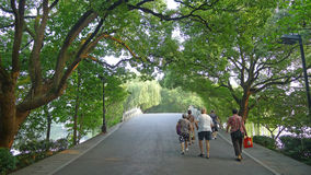 West lake,Su Causeway with Camphor tree stock photography