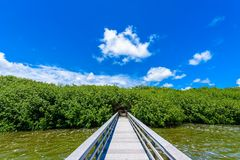 West Lake Trailhead of the Everglades National Park. Boardwalks in the swamp. Florida, USA royalty free stock images