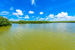 West Lake Trailhead of the Everglades National Park. Boardwalks in the swamp. Florida, USA royalty free stock photo