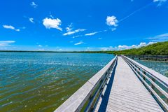 West Lake Trailhead of the Everglades National Park. Boardwalks in the swamp. Florida, USA royalty free stock image