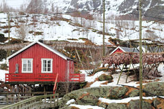 West lofoten's cabins and stockfish  in wintertime Stock Photo