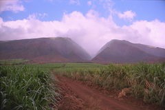 West Maui Mountains. A vista cutting through sugar cane fields into the heart of the west maui mountains Hawaii Stock Images