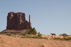 West Mitten Butte with horse in Monument Valley, Arizona Stock Photos