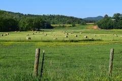 West-NC-Bauernhoffeld mit Heurollen und grünem Gras Stockfotografie