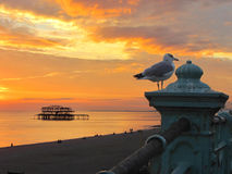 The West Pier, Brighton England UK. Sunset scene with seagull Stock Image