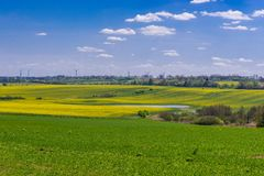 Fields in Poland. West Pomerania region landscape with yellow rapeseed fields, Poland royalty free stock photos