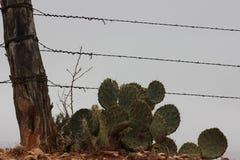 West-Texas-Ansicht Stockfotografie