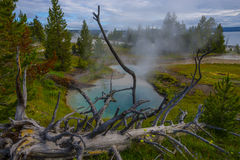 West Thumb Geyser Basin Yellowstone Royalty Free Stock Photography