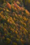 West viginia autumn Stock Photography