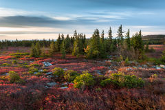 West Virginia Dolly Sods Wilderness Area Autumn Landscape Royalty Free Stock Photos