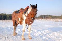 Westelijke 01 Royalty-vrije Stock Foto