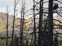 Westelijke Bergregenboog royalty-vrije stock foto