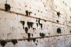 Westelijke muursteen en vegetatie Royalty-vrije Stock Afbeeldingen
