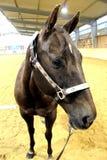 Westelijke paardfoto royalty-vrije stock foto's