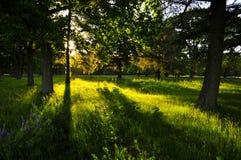 Free Westerbork Transit Camp Grounds (Netherlands) Royalty Free Stock Photos - 56910548