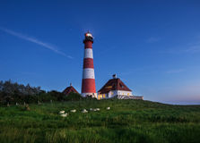 Westerhever Lighthouse. At dawn with sheep Royalty Free Stock Photography