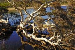 Western Australia: D'entrecasteaux n. park Royalty Free Stock Photography