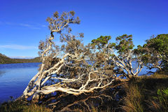 Western Australia: D'entrecasteaux n. park Royalty Free Stock Photos