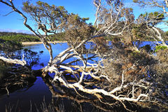 Western Australia: D'entrecasteaux n. park Stock Photography