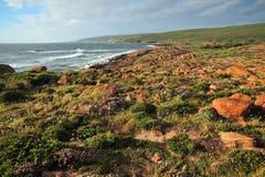 Western Australian coastline flowers Stock Photography