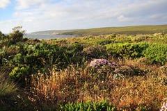 Free Western Australianl Coastline Flowers Royalty Free Stock Image - 7466836