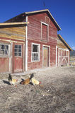 Western barn. With roosters on route 50 in NV Stock Photography