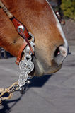 Western Bit and Bridle Stock Photos