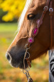 Western bridle Royalty Free Stock Images