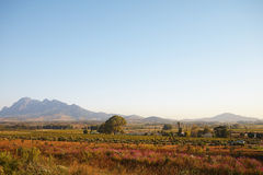 Western Cape Landscape royalty free stock images