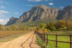 Western Cape vineyard Stock Photos