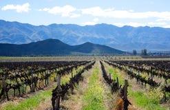 Western Cape Winelands Royalty Free Stock Image