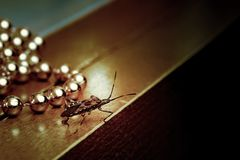 Free Western Conifer Seed Bug Walking Across The Table At A Christmas Chain Of Beads. Leptoglossus Occidentalis Royalty Free Stock Photos - 162103248