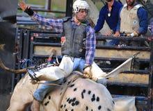 Western Cowboy bull riding at rodeo Royalty Free Stock Photos