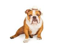 Western Cowboy English Bulldog Stock Photo