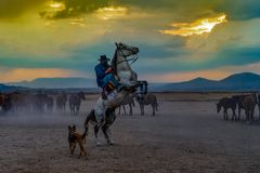 Western cowboys riding horses with dog in dusts. Horse standing on its hind legs with cowboy