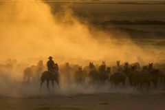 Western cowboys riding horses, roping wild horses Royalty Free Stock Photography