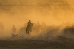 Western cowboys riding horses, roping wild horses Royalty Free Stock Photo