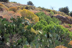 Western Crete Wildflowers Stock Images