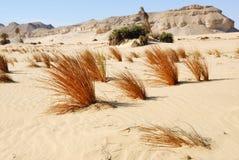 Western desert, Sahara, Egypt Stock Images
