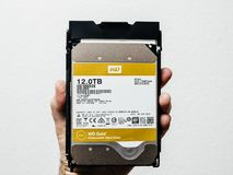 Western Digital Gold HDD disk drive 12 tb man holding Royalty Free Stock Image
