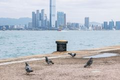 Western district cargo pier in Hong Kong. Western district cargo pier in HongKong royalty free stock photography