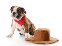 Western dog Royalty Free Stock Photography