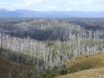 Western Explorer Road, Tasmania Royalty Free Stock Image