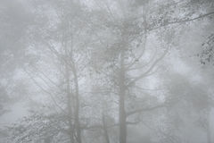 Western ghats-winter mist. Trees at Western ghats covered with mist and fog-winter climate at Munnar regions of mountains- December  Idukki Dist, Kerala, India Royalty Free Stock Photos