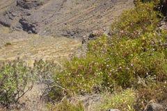 Western Gran Canaria, May Stock Images
