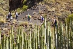 Western Gran Canaria, May. Hiking route Tasartico - Playa GuiGui, ravine Barranco de Aguas Sabinas, arid climate flora royalty free stock photos