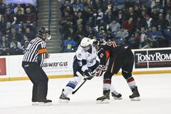 Western Hockey League (WHL) Game Royalty Free Stock Photos