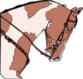 Pinto Horse. Vector illustration of a western horse head in colour Royalty Free Stock Image